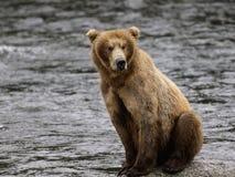 Katmai Bruine Beren; Bekendalingen; Alaska; De V.S. Stock Foto