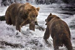 Katmai Bruine Beren; Bekendalingen; Alaska; De V.S. Royalty-vrije Stock Foto's