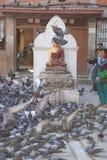 KATMANDU, NEPAL - kan 12: duiven op Stadsvierkant in Katmandu, Stock Fotografie