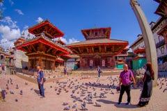 KATMANDU NEPAL OKTOBER 15, 2017: Det oidentifierade folket som går i gatorna med en flock av duvor på Durbar, kvadrerar Arkivbilder