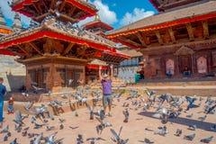 KATMANDU NEPAL OKTOBER 15, 2017: Det oidentifierade folket som står i fyrkanten med en flock av duvor på Durbar, kvadrerar Arkivfoto