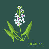 Katniss plant illustration Stock Photos