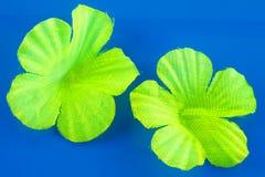 Katoenen bloemblaadjes Royalty-vrije Stock Fotografie