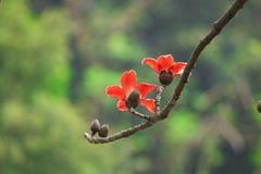 Katoenen bloemen in de lentetijd royalty-vrije stock foto