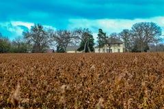 Katoenen landbouwbedrijf royalty-vrije stock afbeeldingen