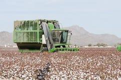 Katoenen oogst stock foto