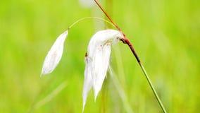 Katoenen phorumschommeling van Erià ³ in de wind stock footage