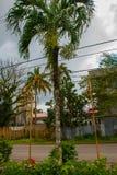 Katolsk domkyrka på bakgrunden av palmträd i Filippinerna Pandan Panay royaltyfria foton