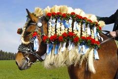 katolsk hästprocession Royaltyfri Bild