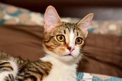 Kats-Nahaufnahme Stockbilder