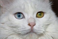 kattögon arkivbild