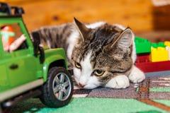 Katt - älsklings- leksaker, medan koppla av Arkivfoto