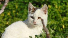 Katt älskvärda djur, grek, kattunge arkivbilder
