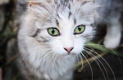 Katt-öga fotografering för bildbyråer