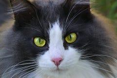Katt-öga närbild arkivbild