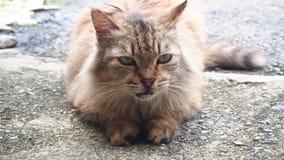 Katt ögon Gräsplan Förälskelse medf8ort royaltyfria bilder