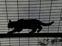 Katt överst av gazeboen Royaltyfri Bild