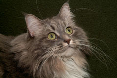 katt 001 arkivfoto