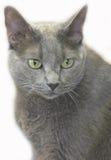 katt 3 Arkivbild