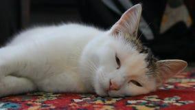 Katt stock video