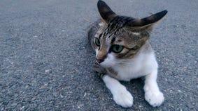 Katt Arkivbild