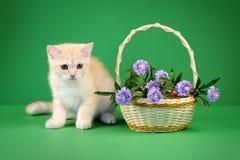 Katt royaltyfri bild