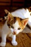 Katt 4 Royaltyfri Bild
