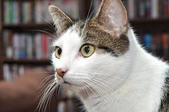 Katt Arkivfoton