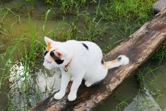 Katt Fotografering för Bildbyråer