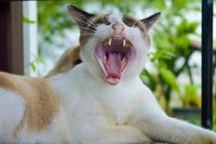 Katt 10 Arkivfoton