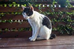 Katt 8 Royaltyfria Foton