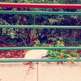 Katt Royaltyfri Fotografi