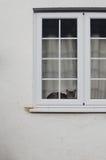 Katt bak fönster Fotografering för Bildbyråer