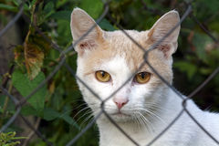 Katt bak staketet Royaltyfri Bild