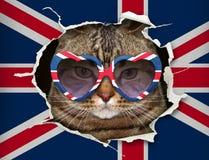 Katt bak UK-flaggan royaltyfri fotografi