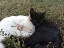 Katt bakgrund, gräs, vit, svart, barn, däggdjur, kattdjur, kattunge, pott, gulligt som är härlig, natur, ögon, päls som är söt, l royaltyfri foto