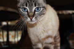 Katt- berlock Arkivbilder