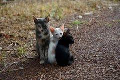 Katt bifokal grå katt för katt Sömnkatt arkivfoton