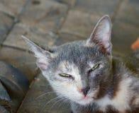 Katt bifokal grå katt för katt Sömnkatt royaltyfri bild