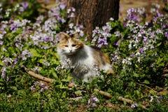 Katt bland blommor Arkivfoton