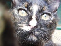 Katt - Bookoro Selfie Royaltyfri Bild