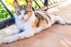 Katt- Cat Kitty Cute Kitten Feline royaltyfri fotografi