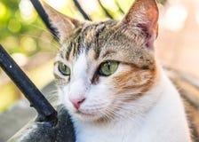 Katt- Cat Kitty Cute Kitten Feline royaltyfri foto