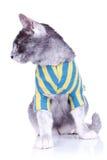 katt dess seende sida till royaltyfri bild