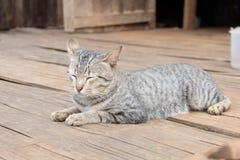 Katt en bambugolvet Arkivfoton