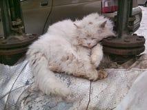 Katt - en favorit av huset Royaltyfria Bilder