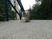Katt för älsklings- omsorg som sover på golv royaltyfri foto