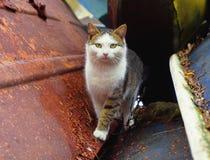 Katt för grå vit på den gamla sovjetiska fartygstationen Sjaskiga skrapade fartyg och Cathararans Arkivfoton