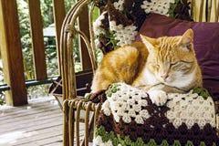 Katt för orange marmelad på stol arkivfoton
