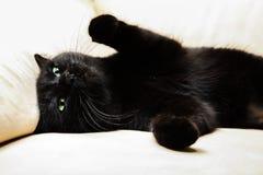 Katt för svart panter Arkivbilder
